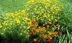 cropped-flowers.jpg